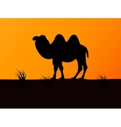 silhouette camel on the background sunset vector image vector image
