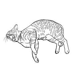 Yawning cat vector image vector image