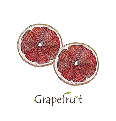 Two sliced grapefruit watercolor vector