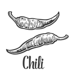 Chili vintage engraved for vector image