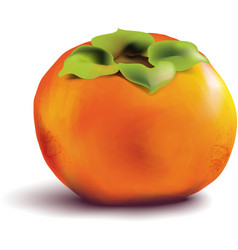 Fruit persimmon on white background vector image vector image