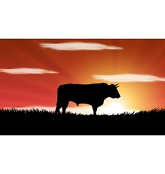 Bull in the field vector