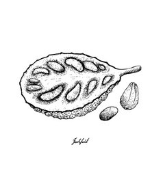 Hand drawn of ripe jackfruit on white background vector