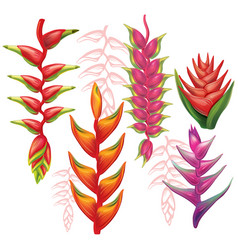 Set of heliconia flowers vector