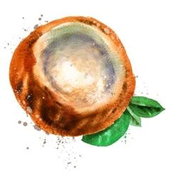 coconut logo design template Walnut or vector image vector image