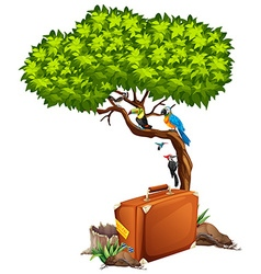 Suitcase and many birds on the tree vector