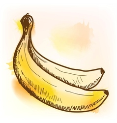 Banana watercolor painting vector