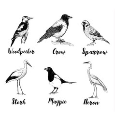 birds set sketch collection of birds vector image