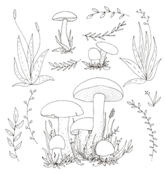 mushrooms and plants vector image vector image