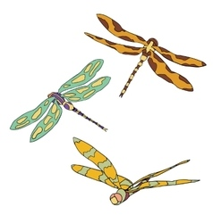 Set of three flying dragonflies isolated on vector image