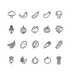 Vegetables food black thin line icon set vector