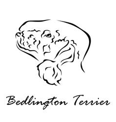 Bedlington terrier vector