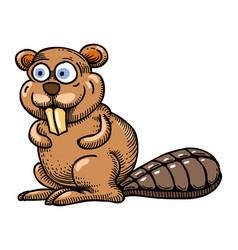 cartoon image of beaver vector image