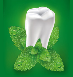 White tooth whitening toothpaste and fresh mint vector