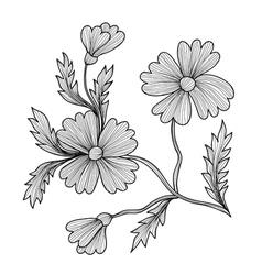 decorative cornflower vector image