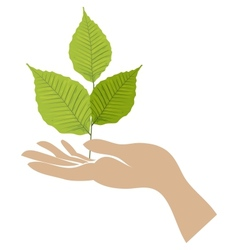 Green leaf with hand vector