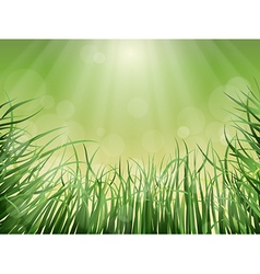 grass rays and glare vector image vector image