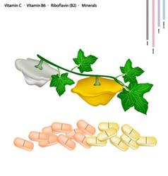 Pattypan squash with vitamin c b6 and b2 vector