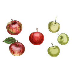 with different apples red and green vector image