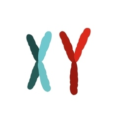 X and Y chromosome icon vector image
