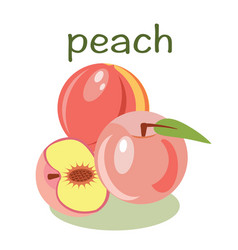 Peach isolated in flat style healthy food vector