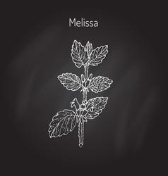 Melissa lemon balm vector