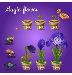 Stages of growing magic blue flower vector