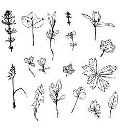 Set of ink drawing herbs leaves and vector