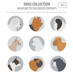 Miniature toy dog breeds collection isolated on vector