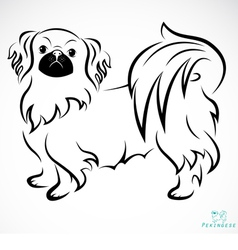 Dog Pekingese vector image