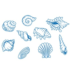 Ocean seashells vector
