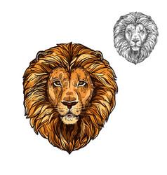 Lion muzzle african wild animal sketch icon vector