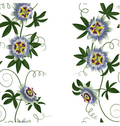 passiflora seamless border vector image vector image