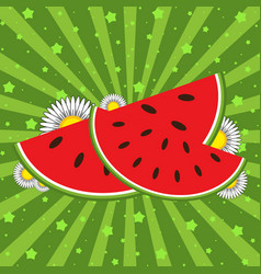 red watermelon slices on a green striped vector image vector image