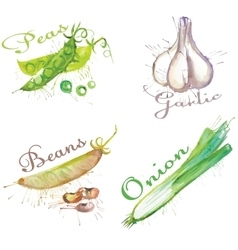 Watercolor blots set of vegetables vector