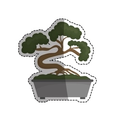 Bonsai japanese tree vector