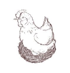 Farm chicken hand draw vector