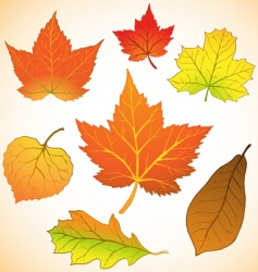 fall leaves vector image