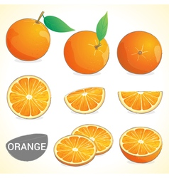 Set of oranges fruit in various styles vector