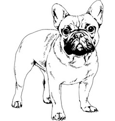 Dog drawn with ink vector