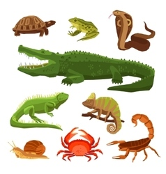 Reptiles and amphibians set vector