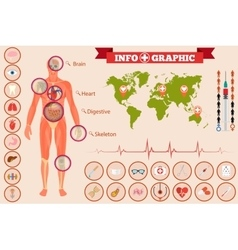 Medical anatomy infographics vector