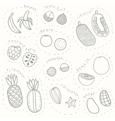 Set of hand drawn sketch tropical fruits part 1 vector