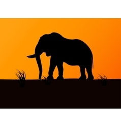 Silhouette elephant on background sunset vector