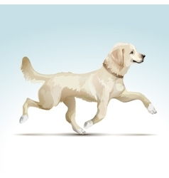 Labrador Retriever Dog vector image vector image