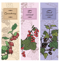 set of berries red currant black currunt vector image vector image