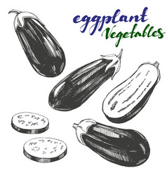 eggplant vegetable set hand drawn vector image vector image