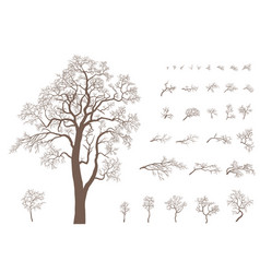 Set of branches and tree vector