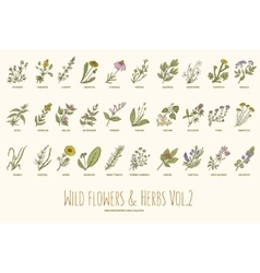 Wild flowers and herbs hand drawn set volume 2 vector
