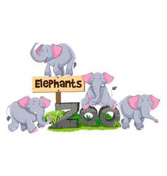 Elephants around the zoo sign vector